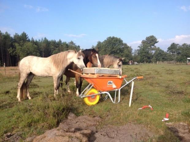 Paarden bij de zeef